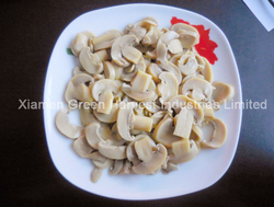 canned mushroom pns china factory supplier