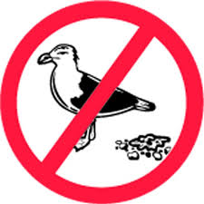 BIRD CONTROL SERVICES FUJAIRAH from BENCHMARK PEST CONTROL & CLEANING SERVICES &TRADING LLC