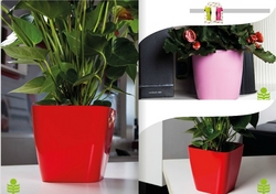 FLOWER POTS IN UAE from HAMZA MAROOF TRADING LLC