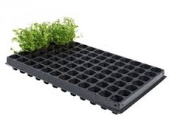 PACKS TRAY FOR PLANTING IN SAUDI ARABIA from HAMZA MAROOF TRADING LLC