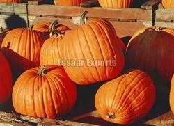 Fresh Pumpkin from ESSAAR EXPORTS