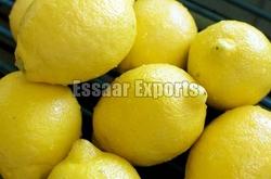 Fresh Lemon from ESSAAR EXPORTS