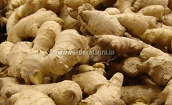 Fresh Ginger from FEDERAL AGRO COMMODITIES EXCHANGE & SUPPLY CO.
