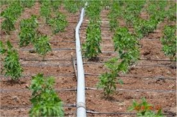 Polyethylene pipes from FIRST INNOVATION FZCO