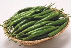 hybrid chilli