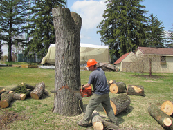 FORESTRY TOOLS from ABDUL JABBAR GENERAL CONTRACTING LLC