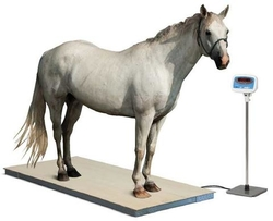Animal weighing Scale suppliers in dubai from CITY SCALES FZC