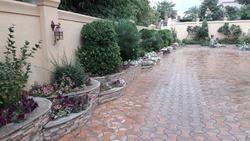 Ornamental Plants from ABDULNASER AL HASHEMI LANDSCAPE GARDENING