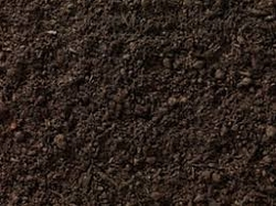 Sweet Soil Supplier in Abu Dhabi