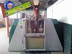 Horse Training Equipments Supply & Services from JEMS SOLUTIONS W L L