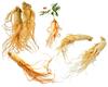 Panax Ginseng Extract ginsenoside