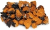 Chaga mushrooms